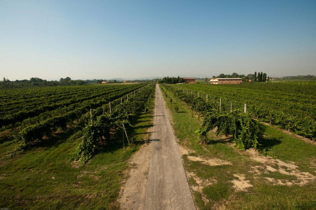 Zanasi società agricola - Azienda Vitivinicola vini e aceti tradizionali