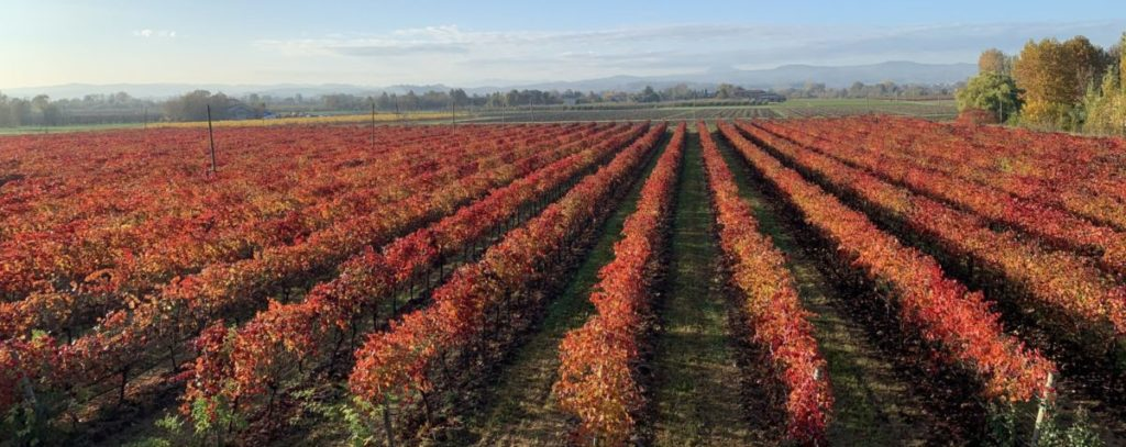 Cantina vinicola Zanasi lambrusco autunno vigna colori rosso